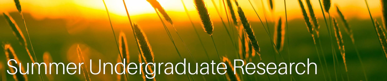 Summer Undergraduate Research